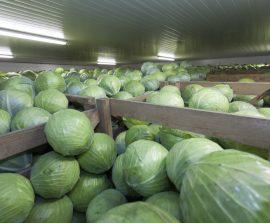 Gemüselagerung